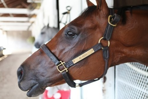 Back on the track: Former Museum Resident Thoroughbred returns to racing