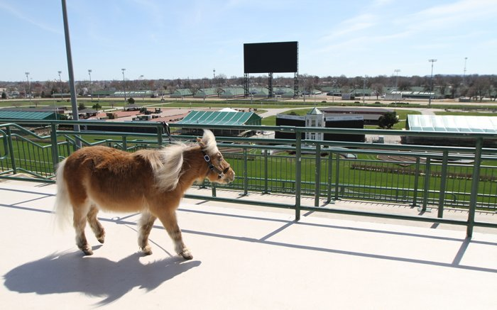 Winston, the Kentucky Derby Museum's beloved miniature horse, announces retirement