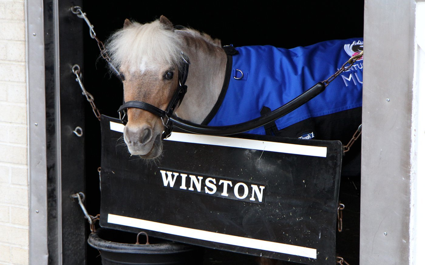 Derby Museum's miniature horse Winston retires after 22 years